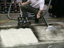 Rotovac Carpet Steam Cleaning Northern VA best